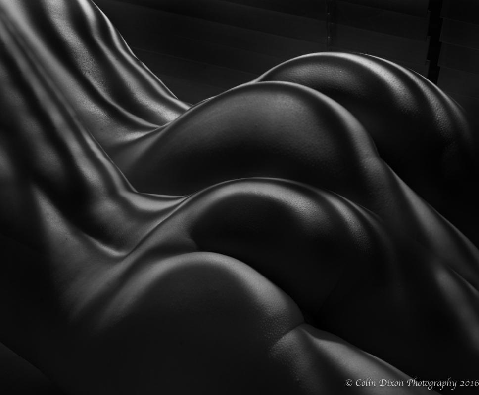 Human Zebra Curves